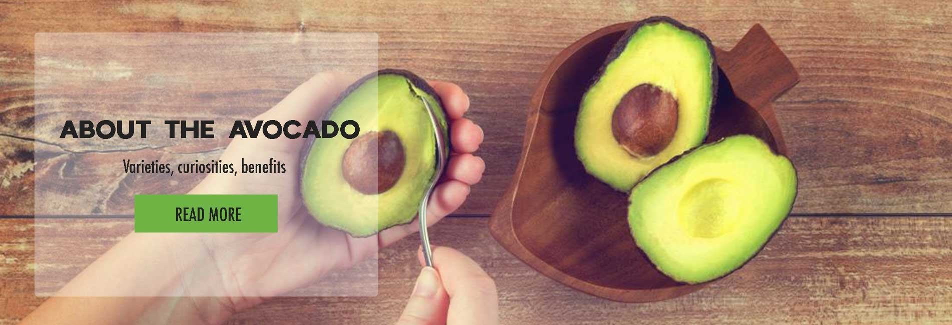 About the avocado